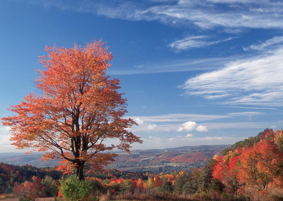 Fall Photograph - Top Of The World by Raju Alagawadi