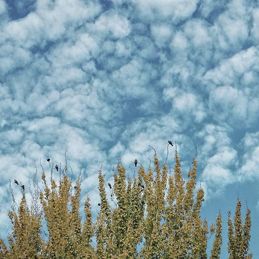 Birds Photograph - Top Pigeons #birds #pigeon #trees #sky by Rafa Rivas