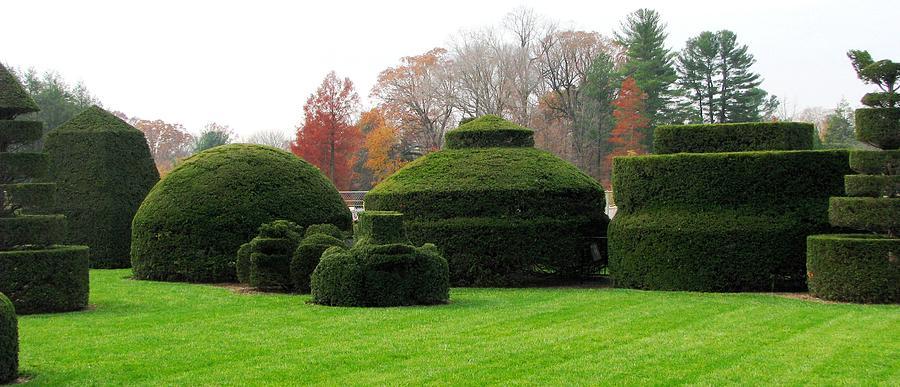 Topiary Garden Photograph - Topiary Garden by Angela Davies