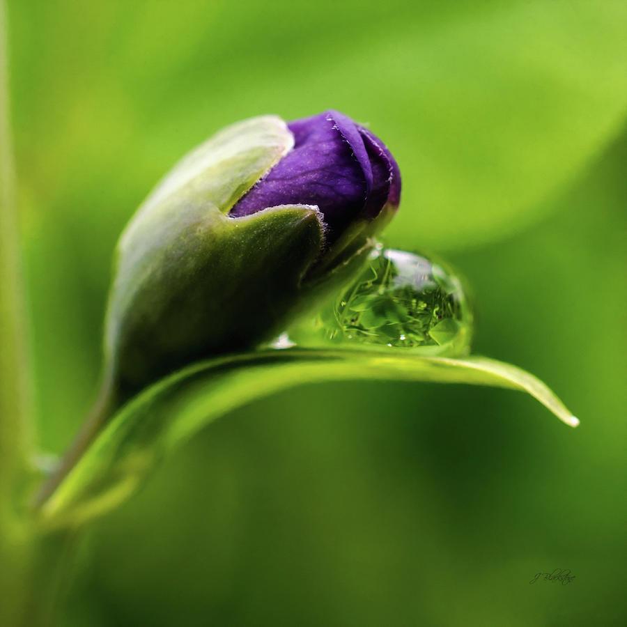 Purple Photograph - Topsy Turvy World In A Raindrop by Jordan Blackstone
