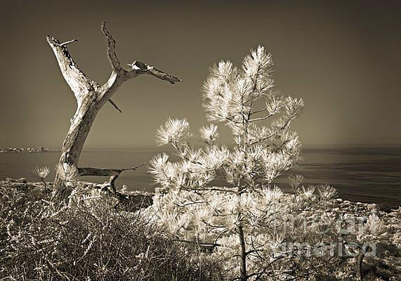 Infrared Photograph - Torrey Pines Ocean View by Eileen Mandell