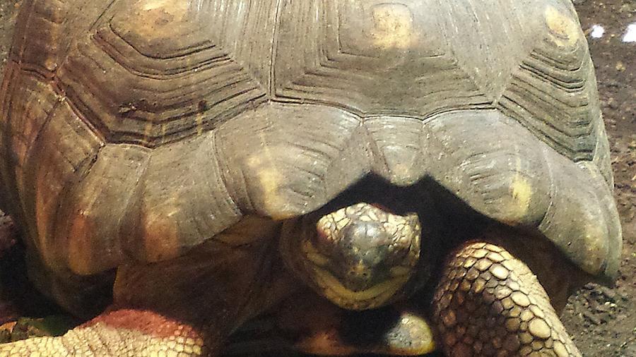 Tortoise Portrait by Kenny Glover