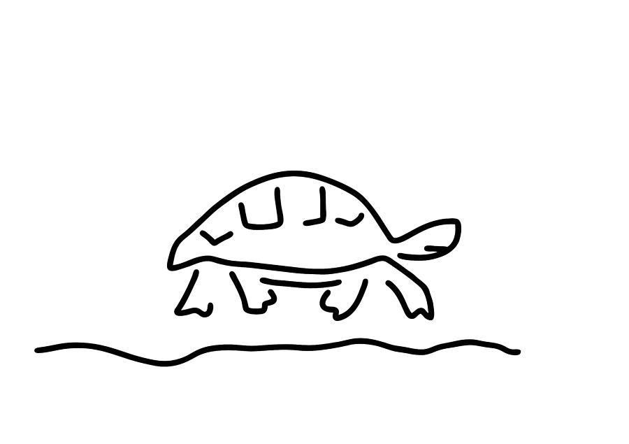 Tortoise Reptiles Tank Drawing