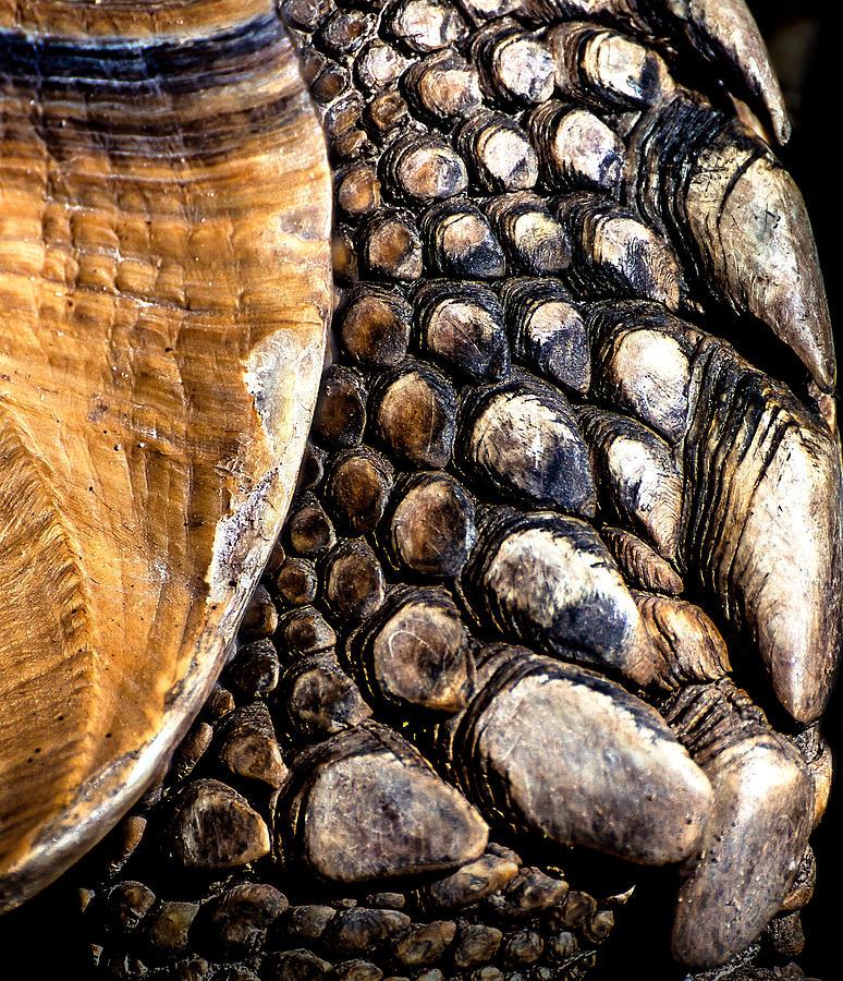 Tortoise Skin by Steven Maxx