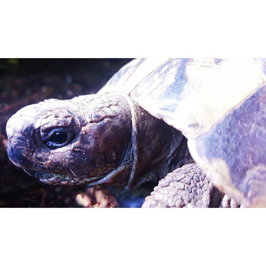 Basking Photograph - #tortoise #torts #sunbathing #basking by Natalie Anne