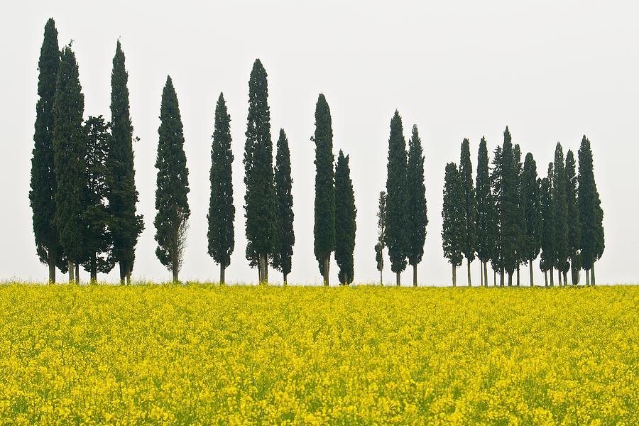 Landscape Photograph - Toscana Cypresses by Igor Voljch