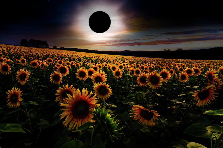 Appalachia Photograph - Total Eclipse Over The Sunflower Field by Debra and Dave Vanderlaan
