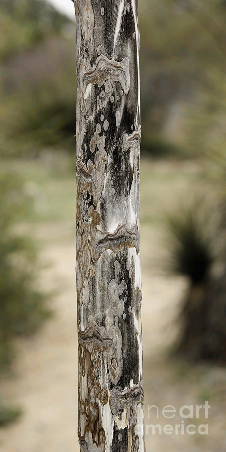 California Photograph - Totem Pole  by Viktor Savchenko