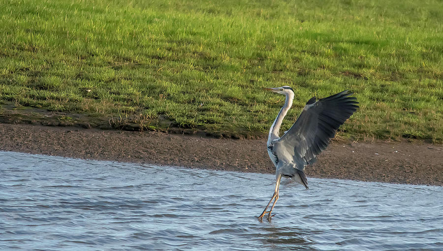 Nature Photograph - Touch Down by Darren Wilkes