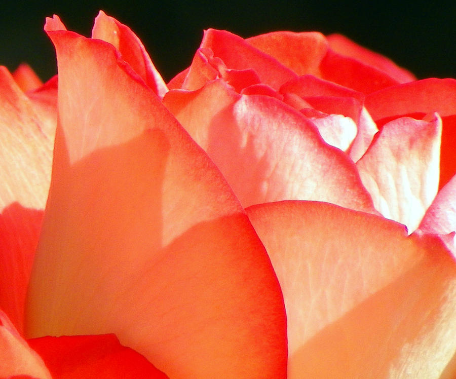 Flowers Photograph - Touch Of Rose by Karen Wiles
