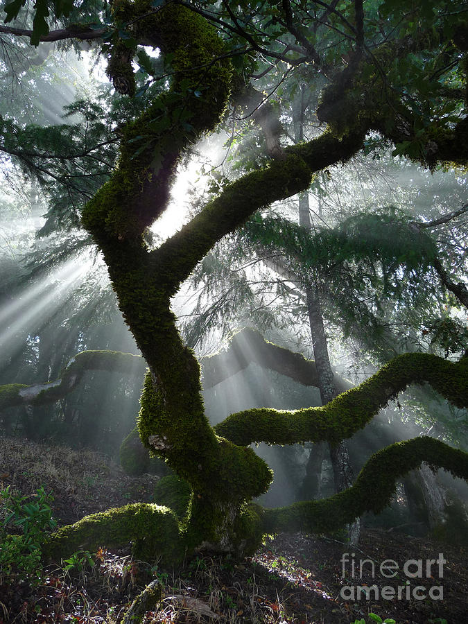 Tree Photograph - Touched By A Miracle by JoAnn SkyWatcher