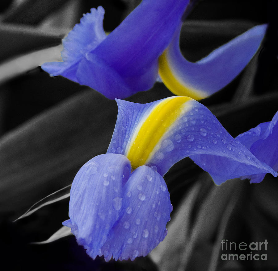 Flower Photograph - Touching by Katherine Morgan