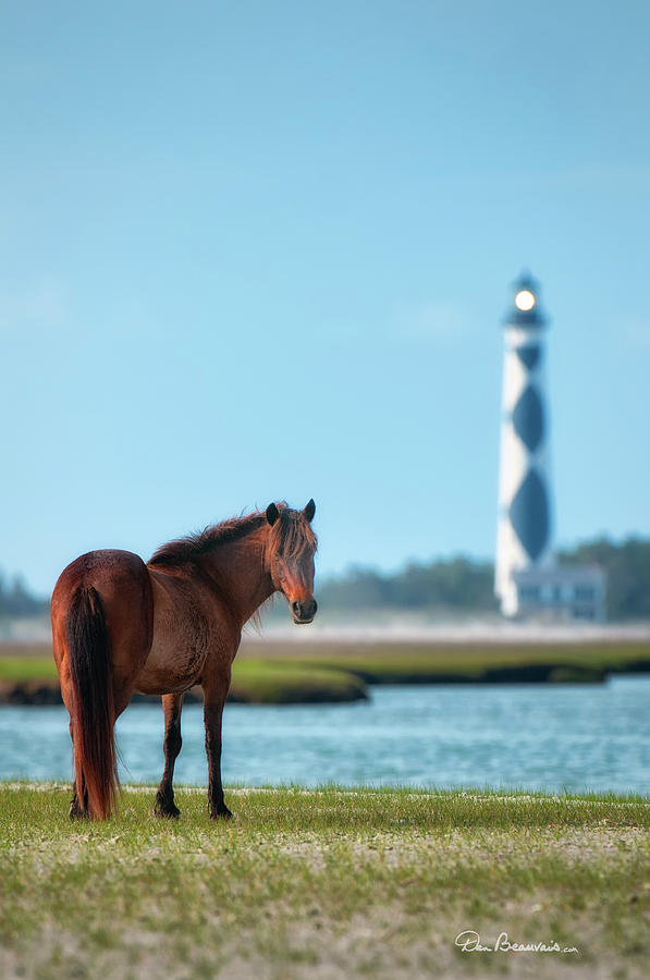 Tour Guide Cape Lookout 3509 Photograph