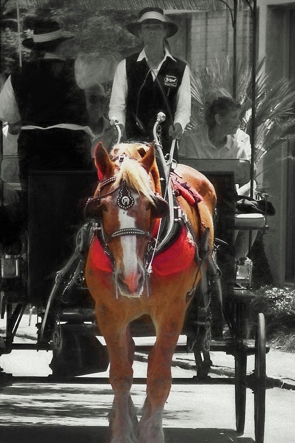 Carriage Photograph - Tour Guide by Dressage Design