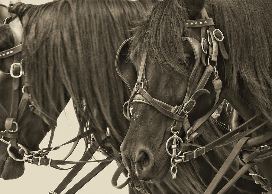 Horse Photograph - Tour Lexington Pair by JAMART Photography