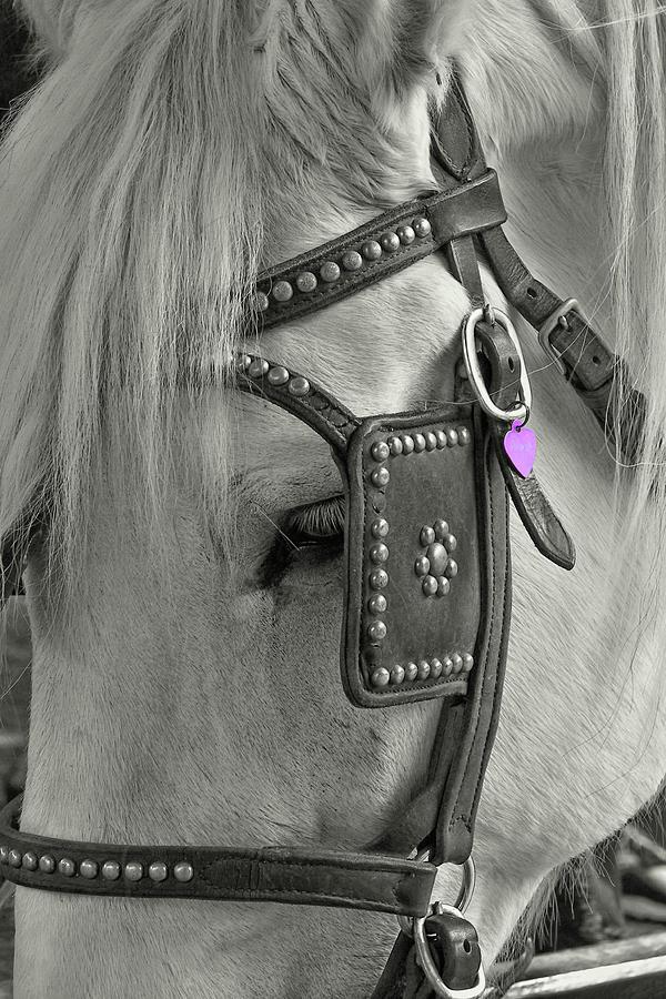 Blinders Photograph - Tour Savannah by Dressage Design
