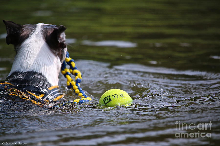 Animal Photograph - Tow Rope by Susan Herber