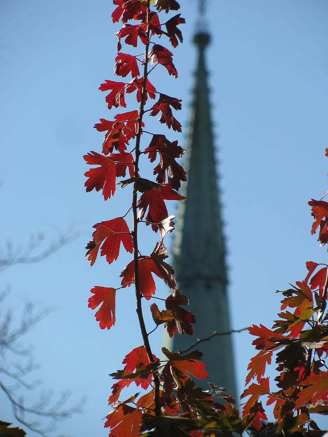 Fall  Photograph - Towering Leaves by Alfred Ng