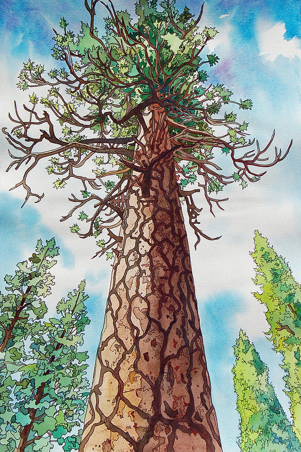 Towering Ponderosa Pine by Terry Holliday