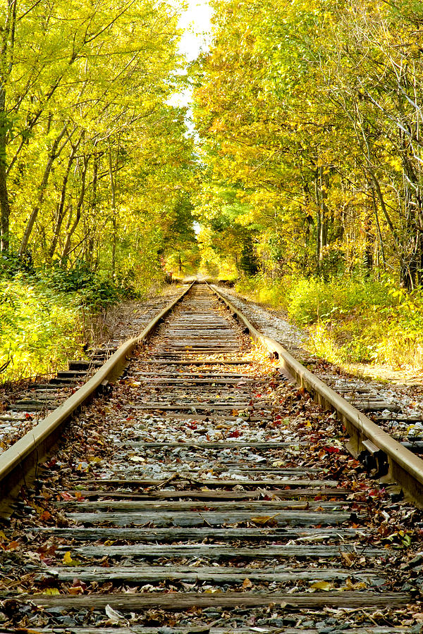 Foliage Photograph - Track To Nowhere by Greg Fortier