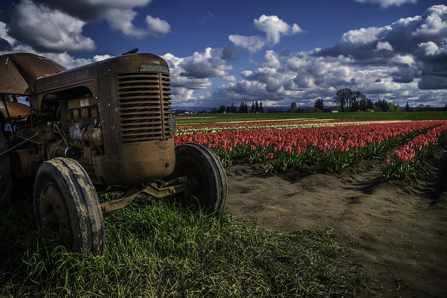 Yellow Photograph - Tractor N Tulips by Ryan Smith