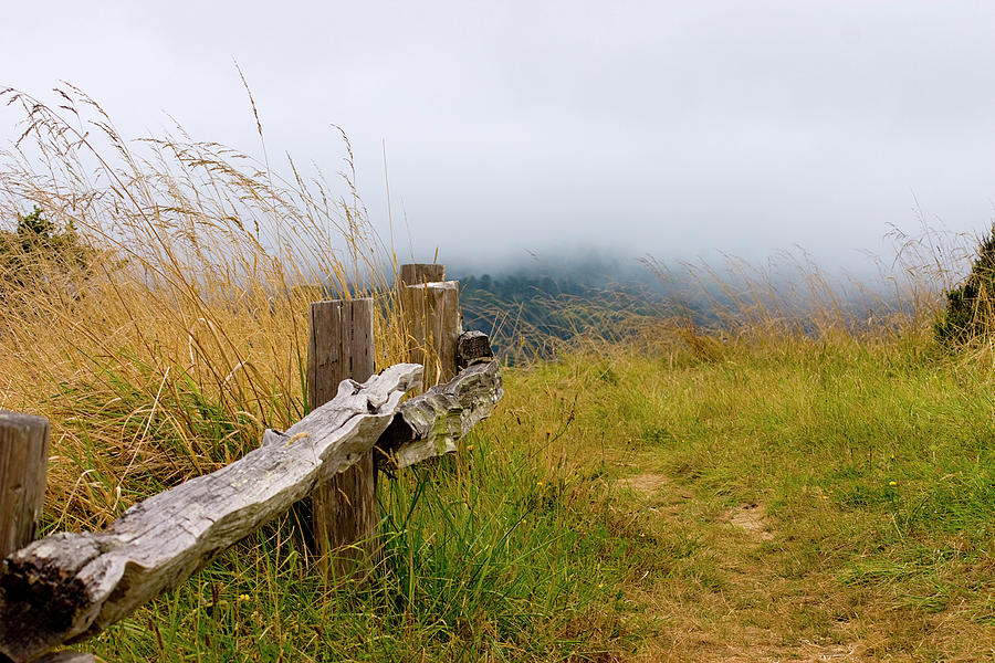 Trail Photograph - Trail With Coastal Morning Fog by Sharon Foelz