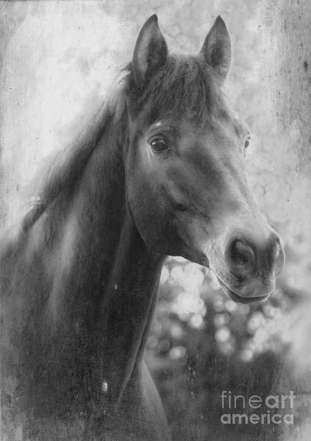 Trakehner Photograph