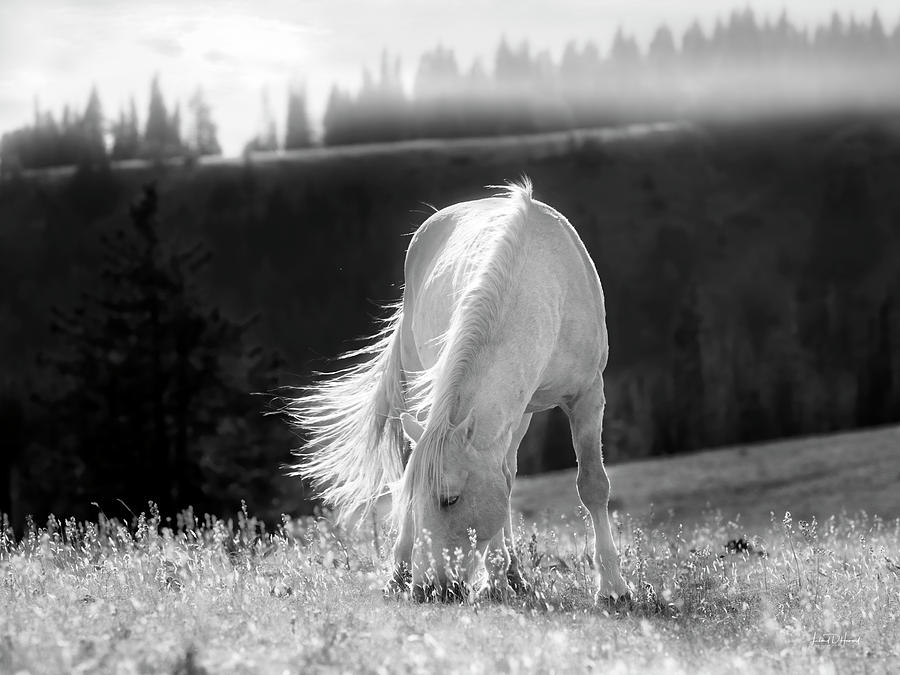 Tranquil Black and White 3 by Leland D Howard
