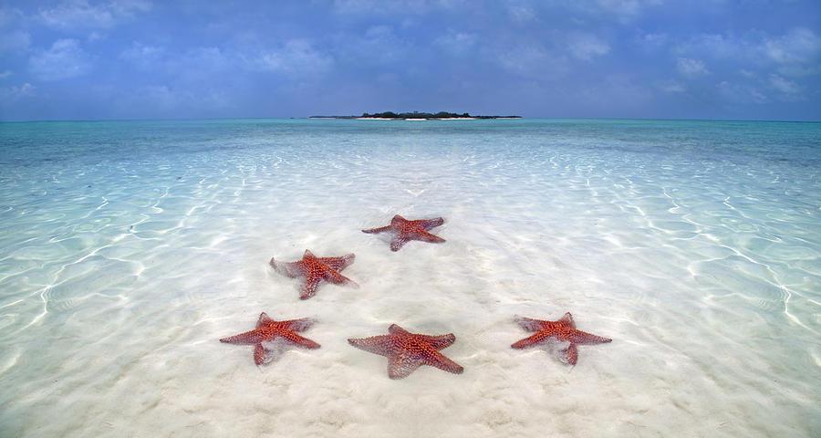 Starfish Digital Art - Tranquil Inspiration  by Betsy Knapp
