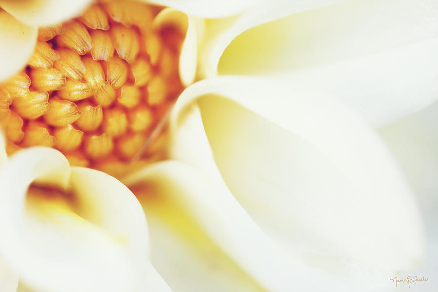Flower Photograph - Tranquil by Nancy  Coelho