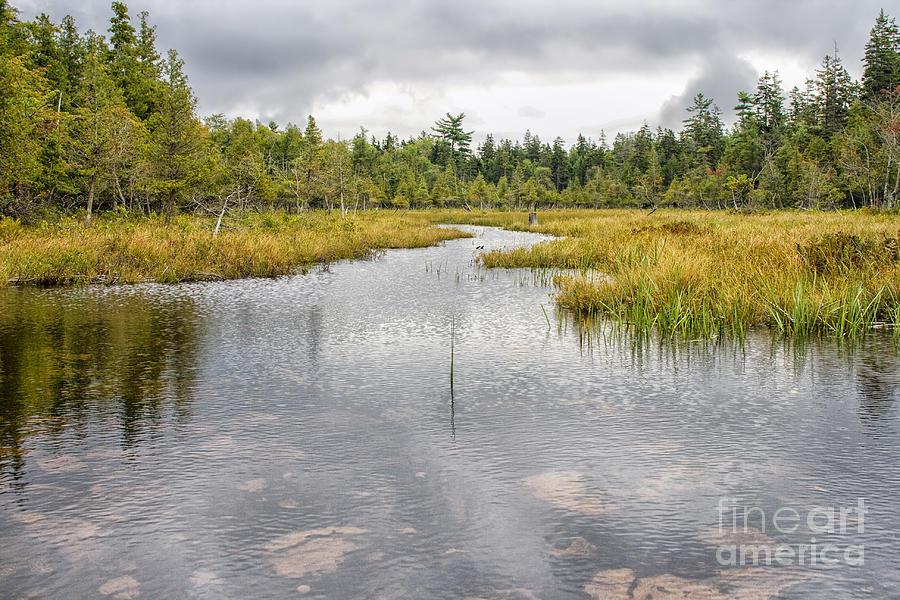 Tranquil Pond Photograph