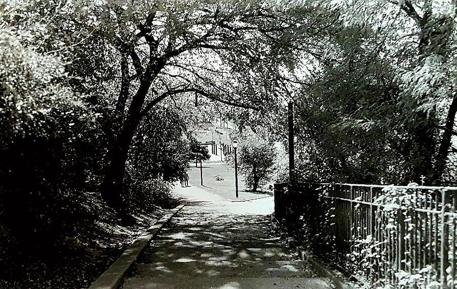 Landscape Photograph - Tranquil Walk by Elizabeth La Caille