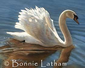 Miniature Painting - Tranquility  -  Mute Swan by Bonnie Latham
