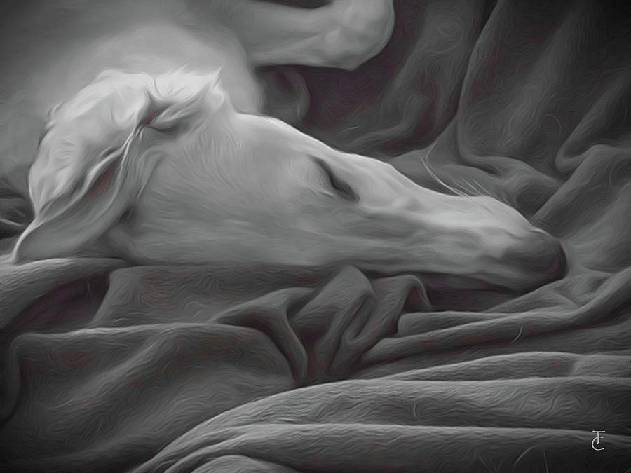 Borzoi Digital Art - Tranquility by Tamara Carey
