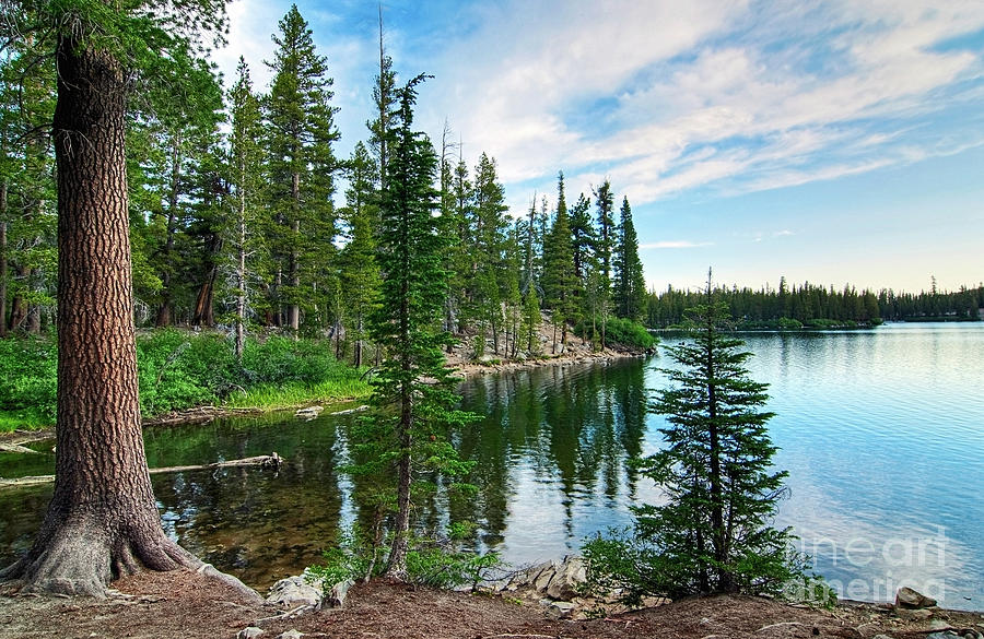 Tree Photograph - Tranquility - Twin Lakes In Mammoth Lakes California by Jamie Pham