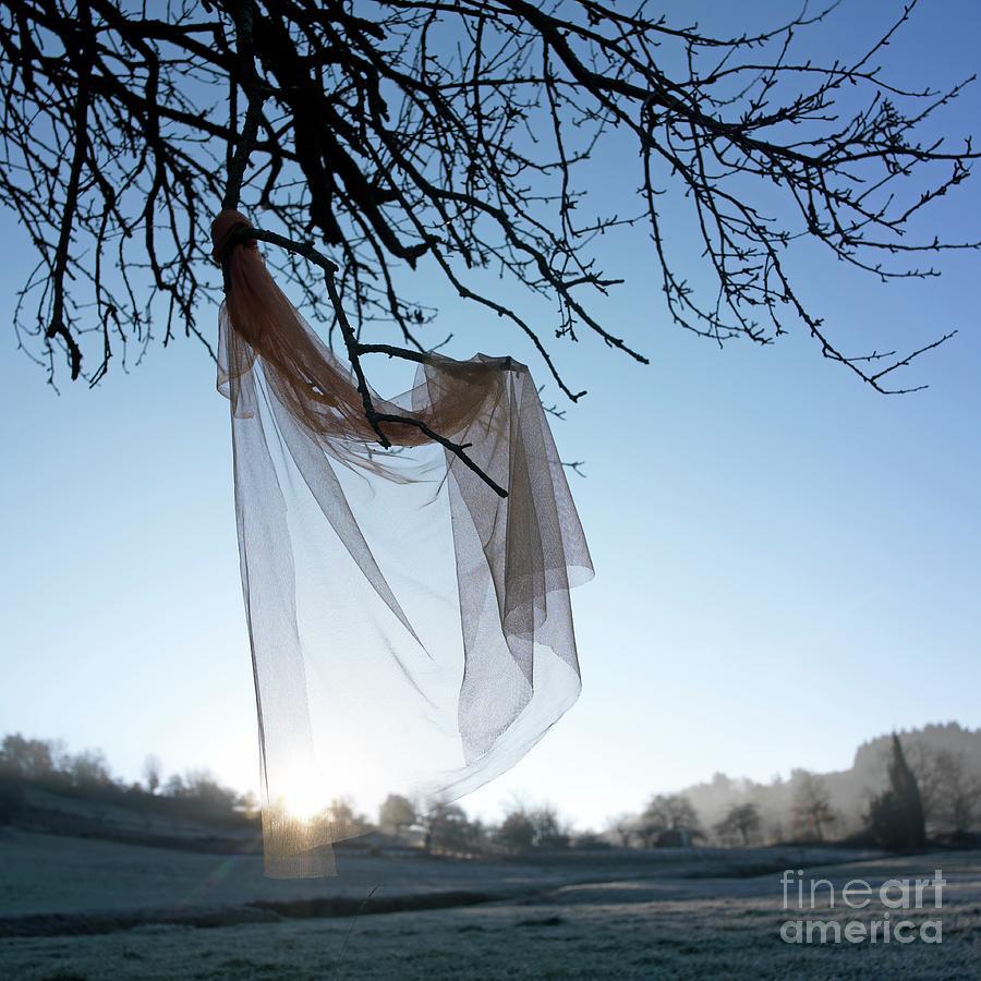 Bare Tree Photograph - Transparent Fabric by Bernard Jaubert
