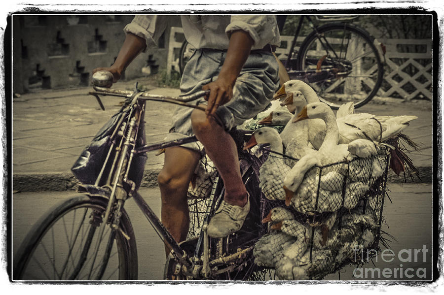 People Photograph - Transport By Bicycle In China by Heiko Koehrer-Wagner