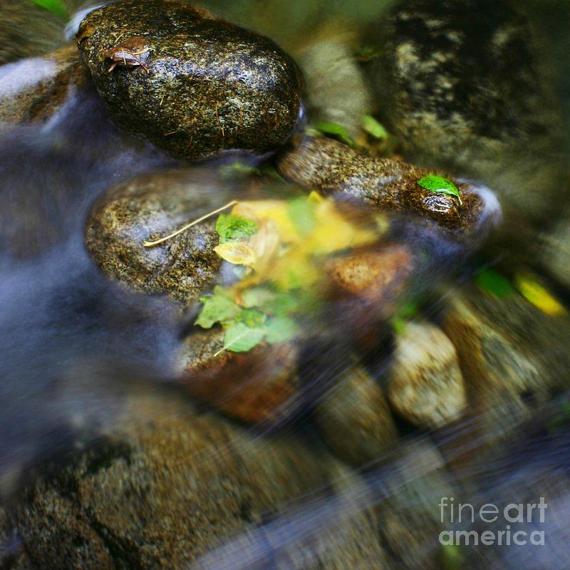 Creek Photograph - Trapped by Michael Wells
