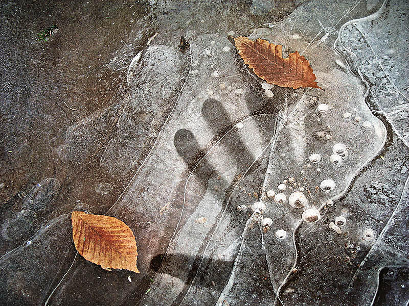 Ice Photograph - Trapped by Paul Bracey