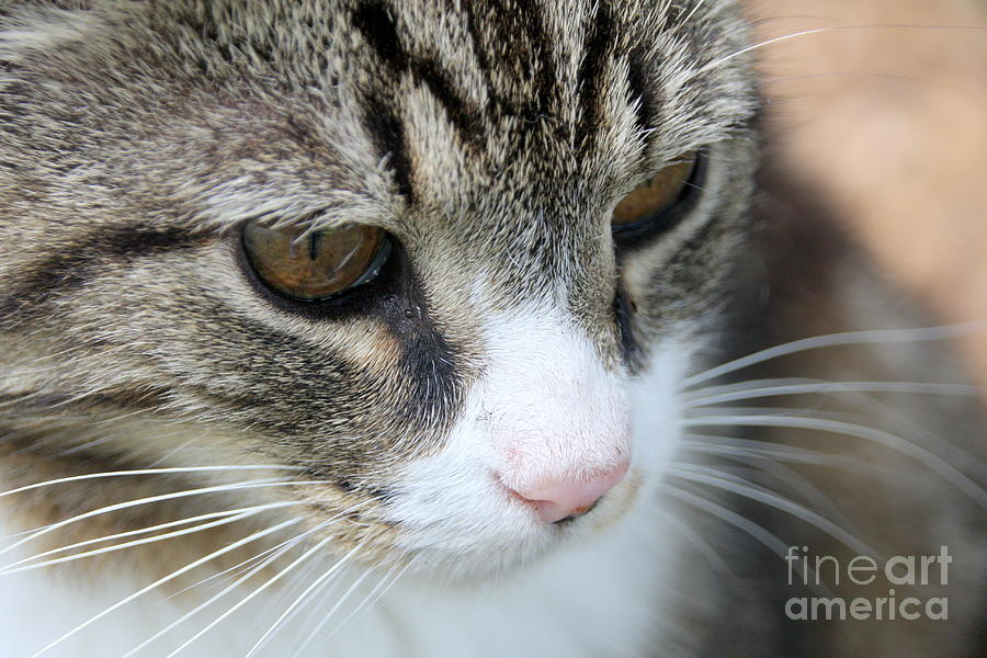 Cat Photograph - Traveller by Wendy Coulson