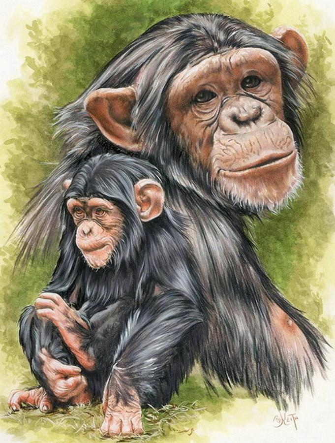 Chimpanzee Mixed Media - Treasure by Barbara Keith