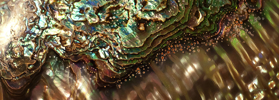 Abalone Shell Photograph - Treasures Await in a Jeweled Tide by Joy Gerow