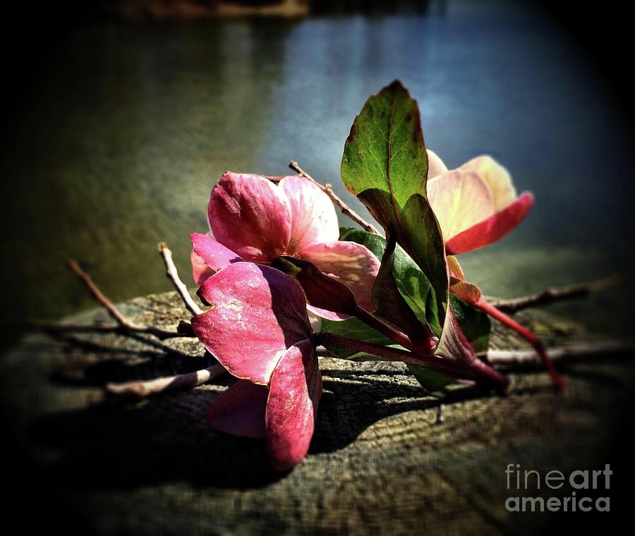 Flower Photograph - Treasures From The Garden by S Forte Designs