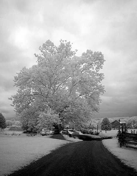Rural Photograph - Tree 5709 by Christine Twomey