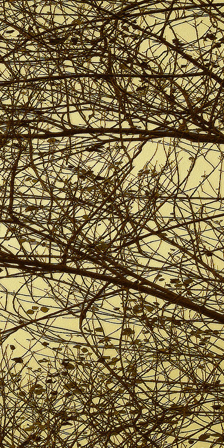 Botanical Abstract Photograph - Tree Abstract In Yellow No 2 by Ben and Raisa Gertsberg