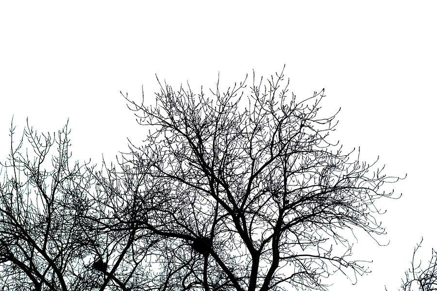 Bird Photograph - Tree And Birdnest by Torchiam Sun