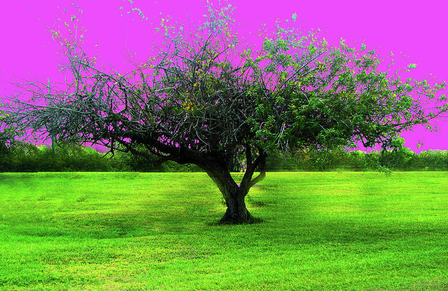 Tree Photograph - Tree And Color by Brigite Inevil