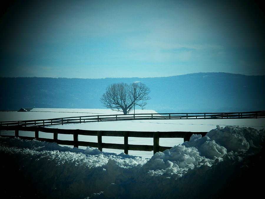 Virginia Photograph - Tree And Fence In Snow by Joyce Kimble Smith