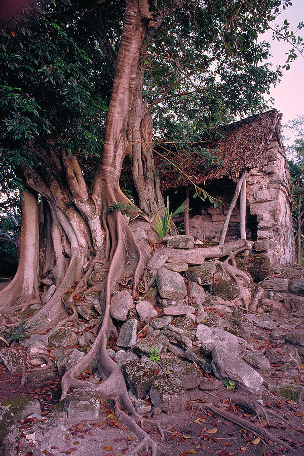 Tree Photograph - Tree And Ruins In Cozumel by Thomas Firak
