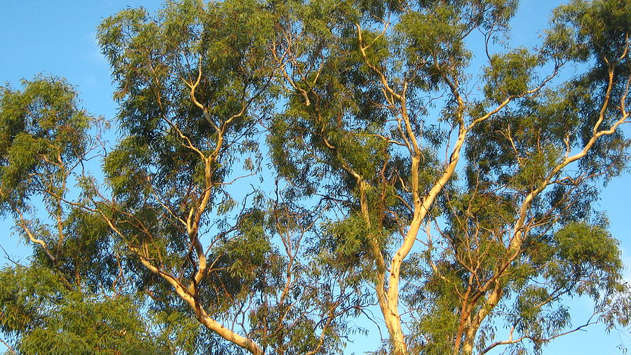 Tree Photograph - Tree and Sky by Emma Frost